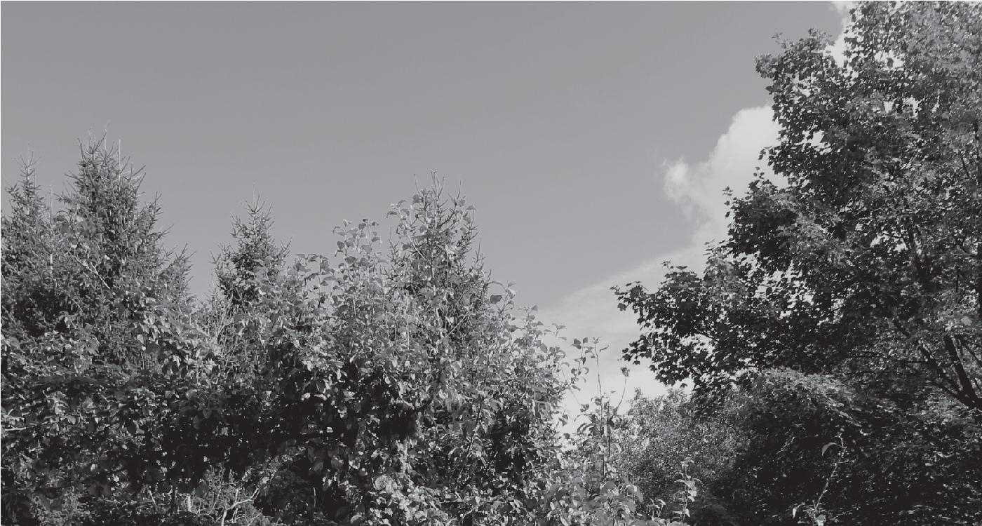Mergelsø vild natur